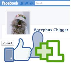 bocephus-Facebook