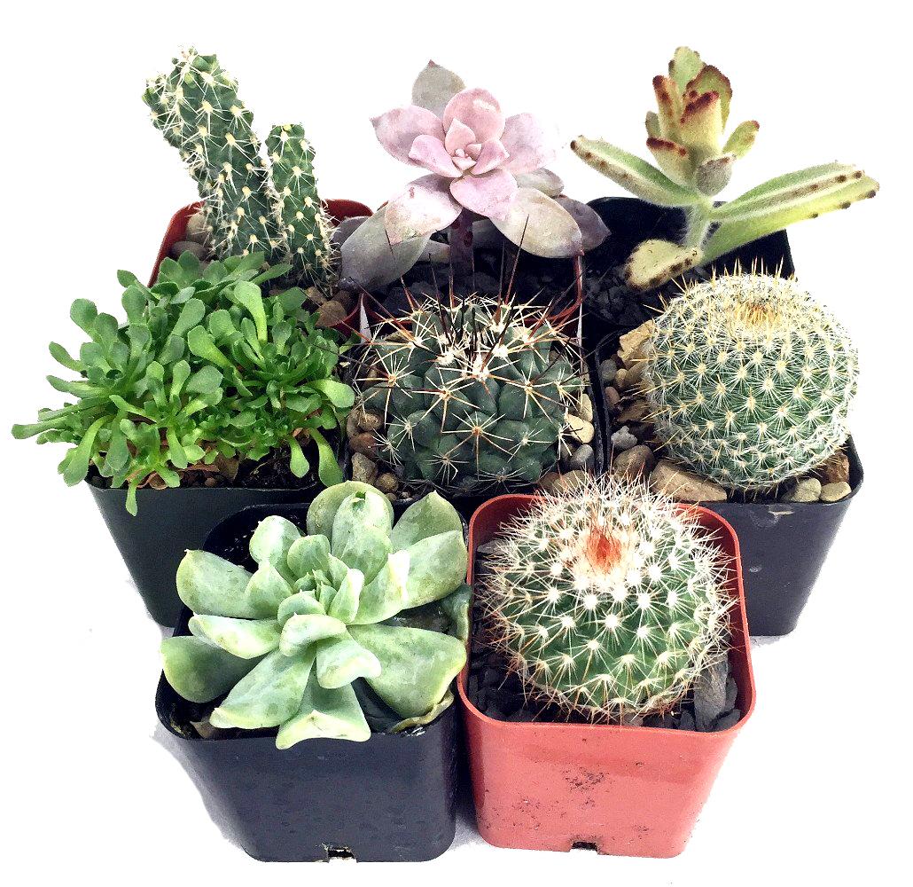 Sacramento Cactus and Succulent Show