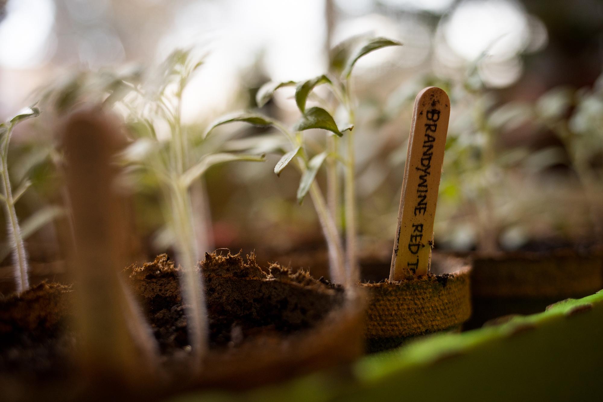 Outside the 9-to-5: Urban Gardening | Submerge Magazine | Music + ...