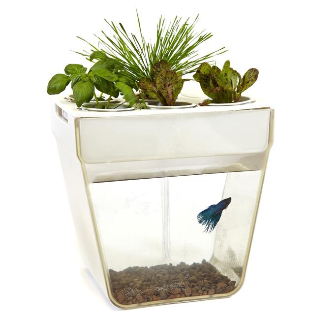 Submerge-AquaFarm