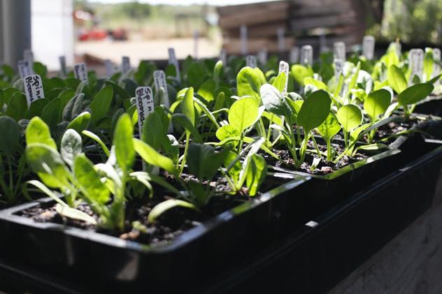 Soil-Born-Farms-a