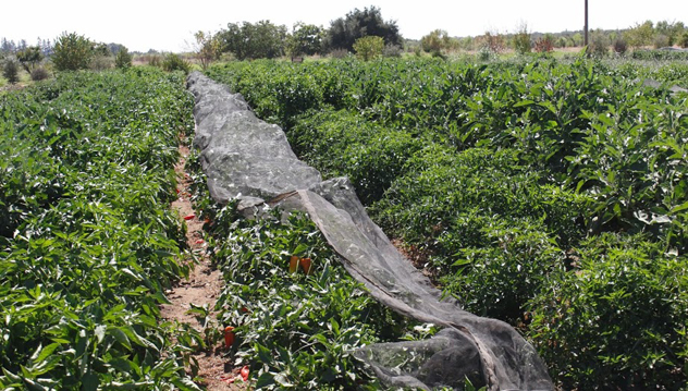 Soil-Born-Farms-c