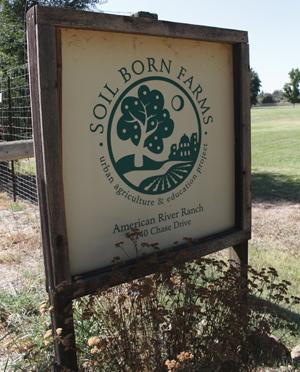 Soil-Born-Farms-d