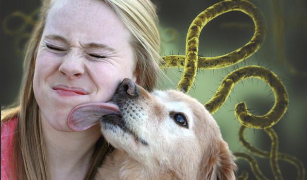 dnews-ebola-dog-large2