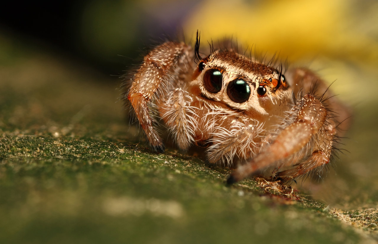 an open letter to spiders